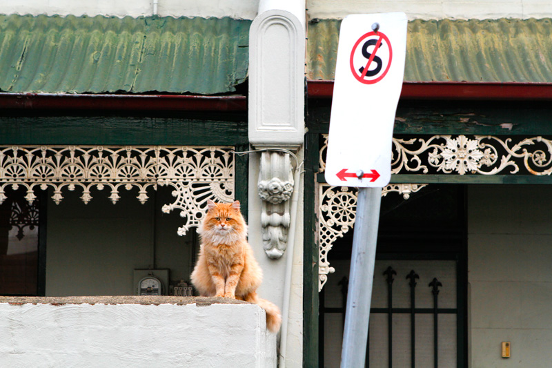 melbourne victorian houses cat photos