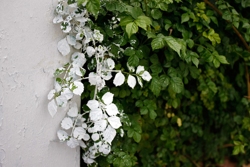 white-paint-on-leaves