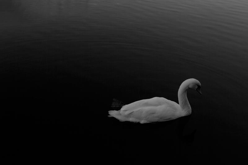 paris-canal-swan