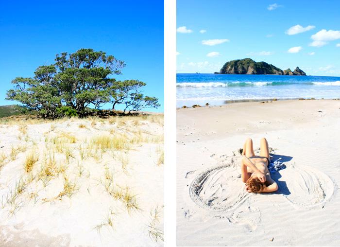 great barrier island new zealand landscape photography