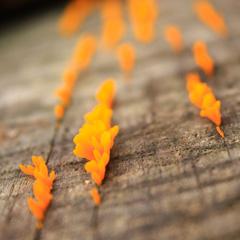 orange-fungi-james-watkins