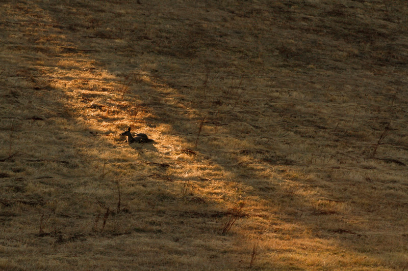 kangaroo-sunset-james-watkins-2