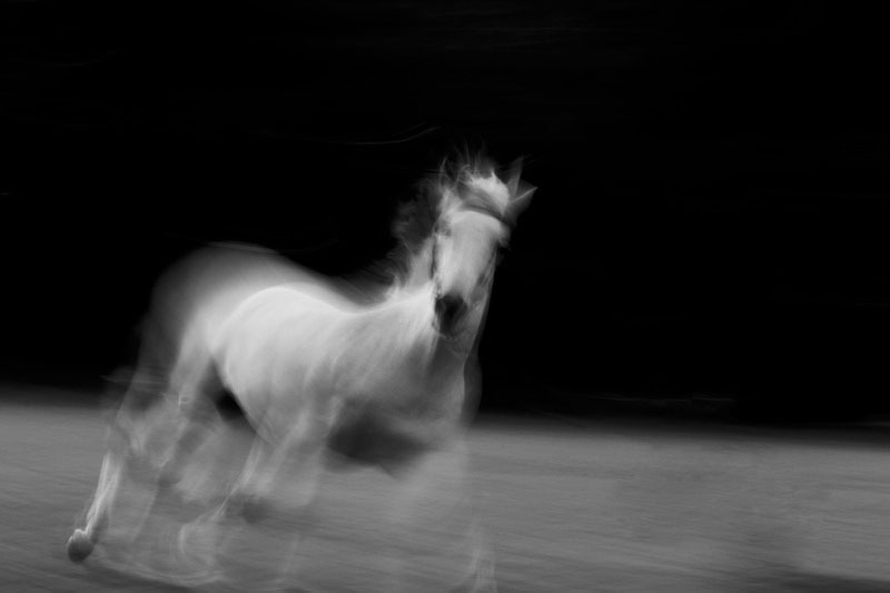 horse-long-exposure-black-and-white-031