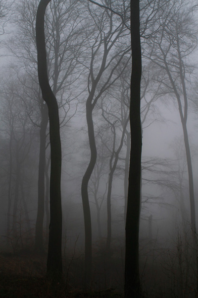chinnor_woods_oxfordshire_thame_oxford_04