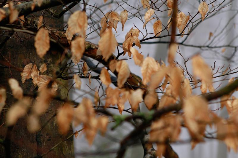 leaves-depth-of-field