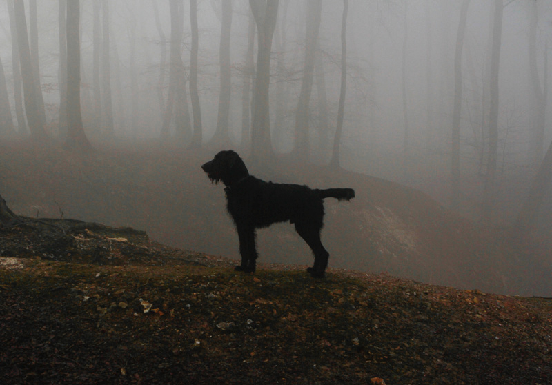 oxfordshire-dog-forest-mist
