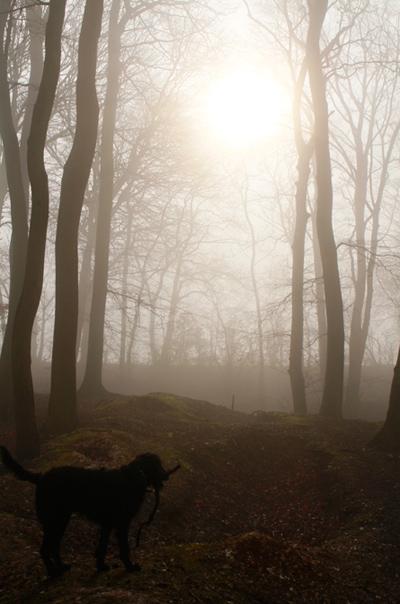 oxfordshire-mist-chinnor-woods