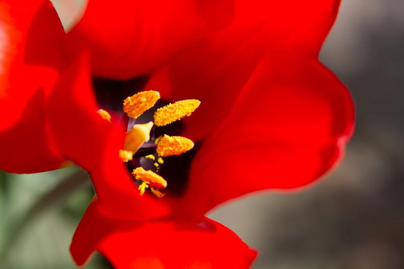 red-flower-macro-