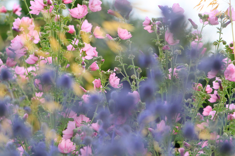 wallpaper-floral