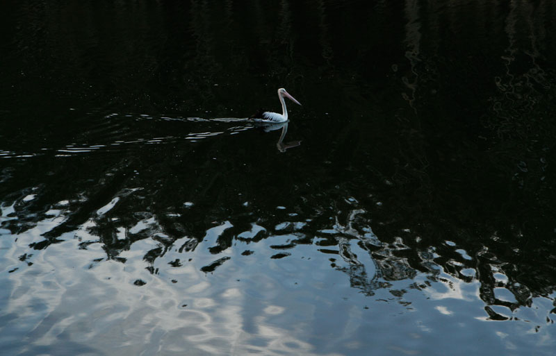 pelican-lake