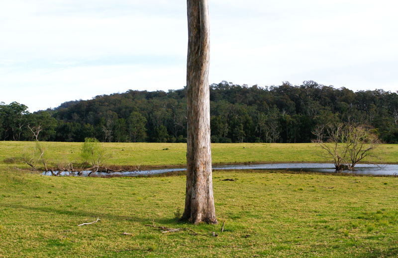 tree-in-field-australia