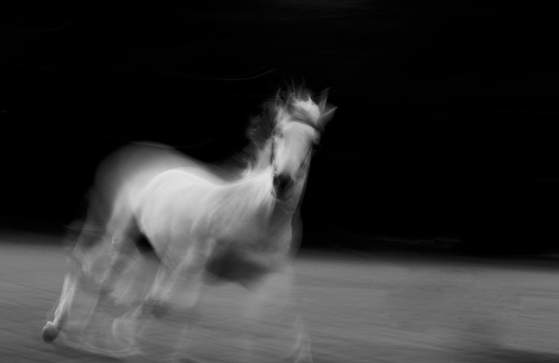 horse long exposure black and white 03