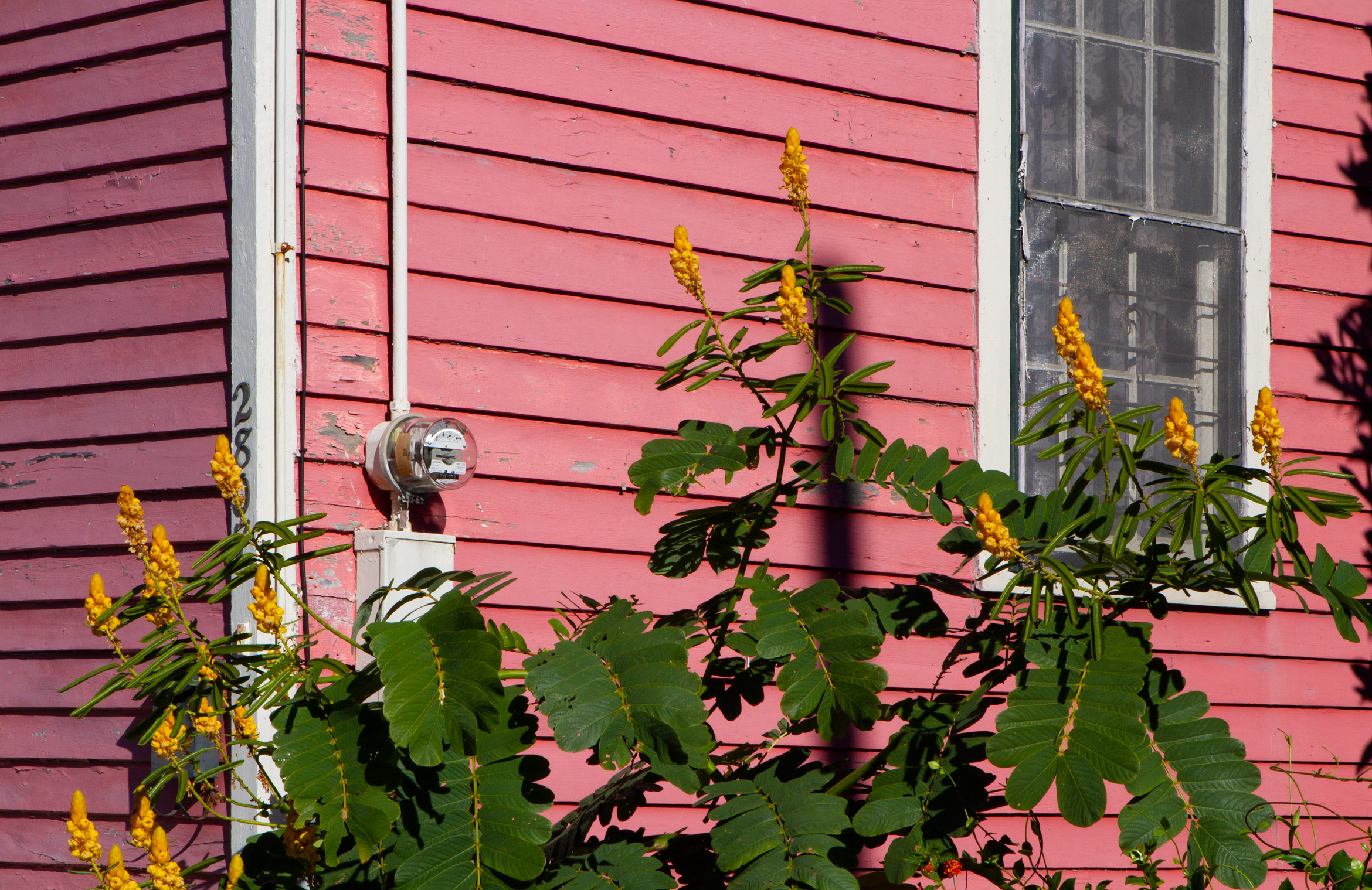 bywater-2