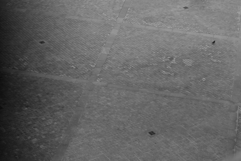 pigeon-paris-louvre