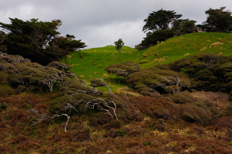 new-zealand-landscape-farm-golden-bay